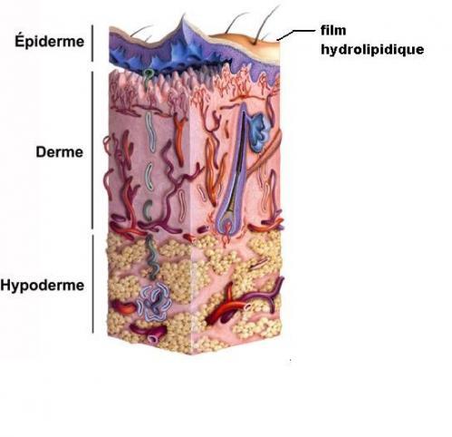 Structure peau